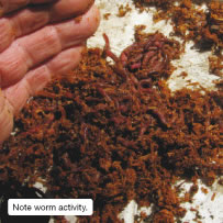 Note worm activity.