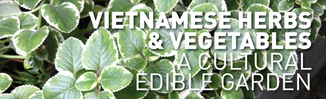 Vietnamese Herbs & Vegetables