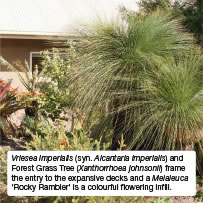 Vriesea imperialis (syn. Alcantaria imperialis) and Forest Grass Tree (Xanthorrhoea johnsonii) frame the entry to the expansive decks and a Melaleuca 'Rocky Rambler' is a colourful flowering infill.