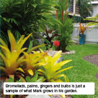Bromeliads, palms, gingers and bulbs is just a sample of what Mark grows in his garden.