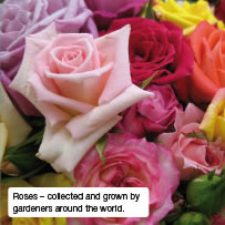 Roses – collected and grown by gardeners around the world.