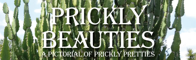 Prickly Beauties - a pictorial of prickly pretties