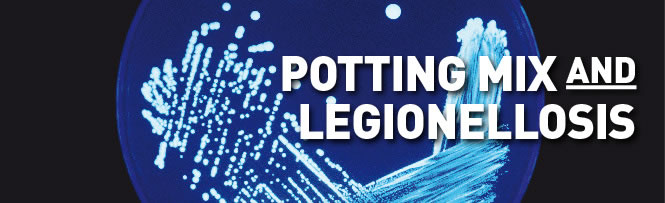 Potting mix and Legionellosis