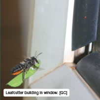 Leafcutter building in window. [GC]