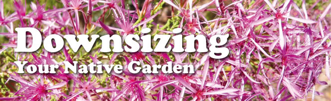 Downsizing Your Native Garden