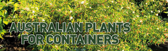Australian Plants for Containers