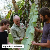 Inspection for disease.