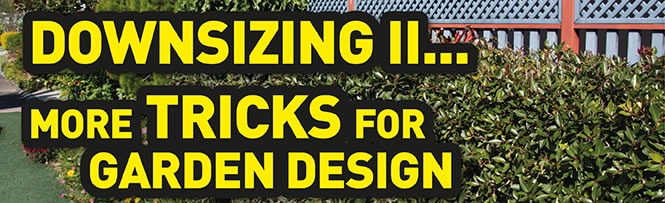 Downsizing II... more Tricks for garden design