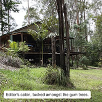 Editor's cabin, tucked amongst the gum trees.