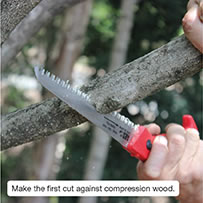 Make the first cut against compression wood.