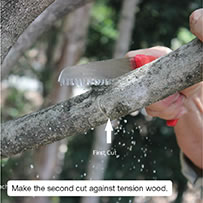 Make the second cut against tension wood.